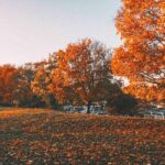 Photo Diary: Autumn in Stockholm